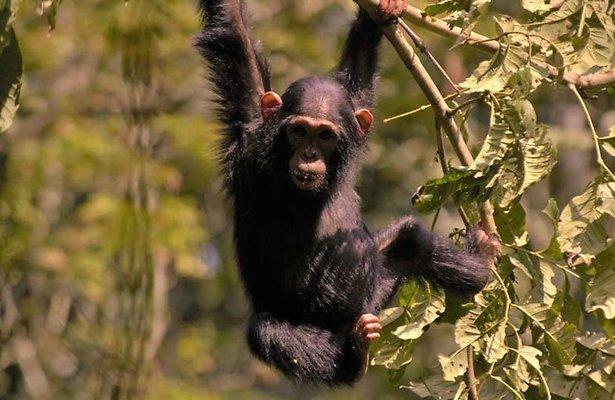 Nieuw op Disney+: Wild Uganda